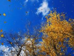 pioppi ottobre2.jpg
